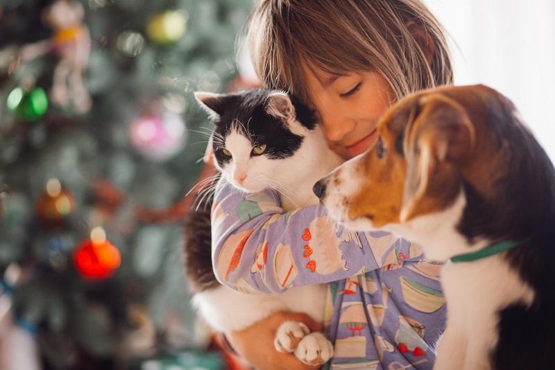 Jak dbać o psa i kota zimą?