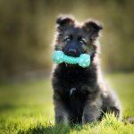Gryzaki dla psa jako idealny sposób na nudę